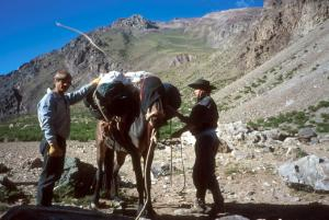 Muleteers at work